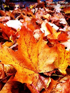 leaves copy