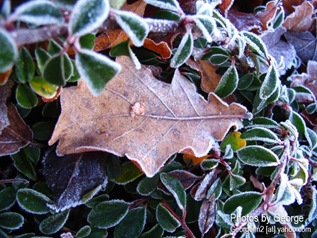 frost with leaves
